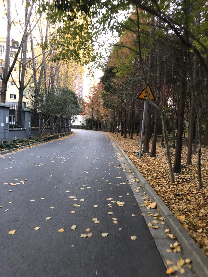 {日记}黄叶落,秋意浓。